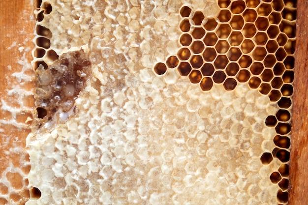 Mel de abelha fresco em estrutura de madeira em forma de favo de mel
