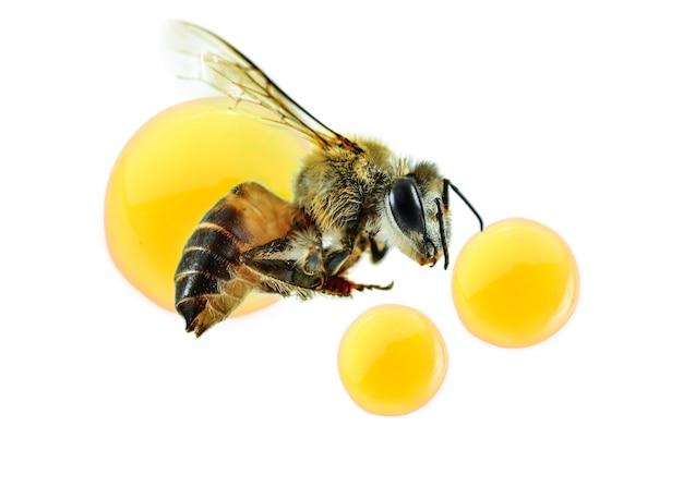 Mel de abelha isolada no branco. vista do topo
