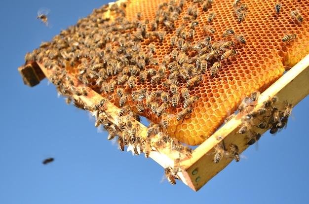 Mel e abelhas em favos de mel sobremesa deliciosa útil