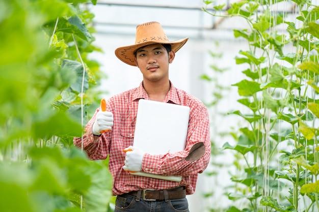 Melão de agricultor, agricultura inteligente, usando tecnologias modernas na agricultura. agricultor agrônomo de homem com o computador portátil na fazenda de melão.