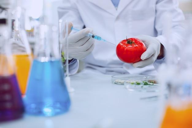 Melhorando a qualidade. biólogo profissional inteligente vestindo uniforme e testando tomates
