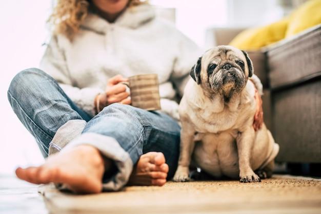 Melhores amigos para sempre humanos e retrato de cachorro com foco no animal de estimação e weoman irreconhecível na cena