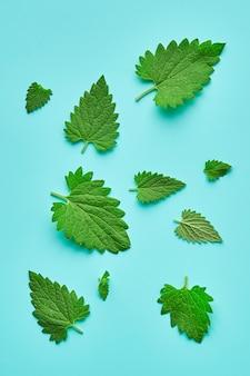 Melissa ou erva-cidreira da folha isolado. folhas do erva-cidreira de tamanhos diferentes isoladas. composição de melissa ou erva-cidreira.