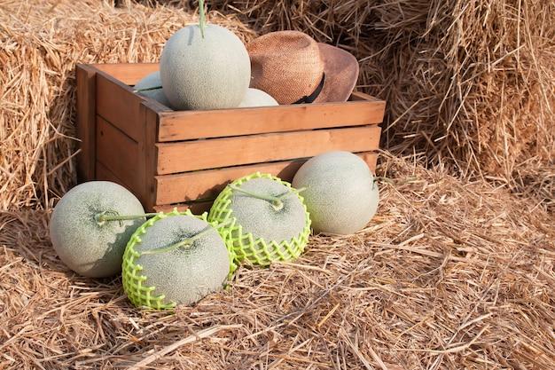 Melões frescos na caixa de madeira e na palha pronto para vender no mercado do fazendeiro