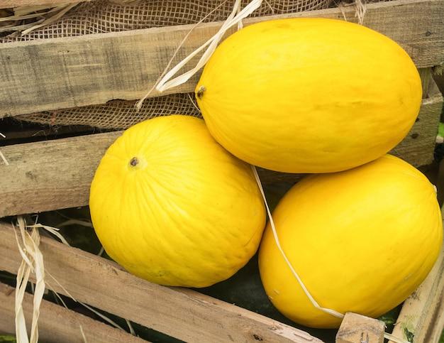 Melões orgânicos amarelos maduros em uma caixa de madeira no mercado