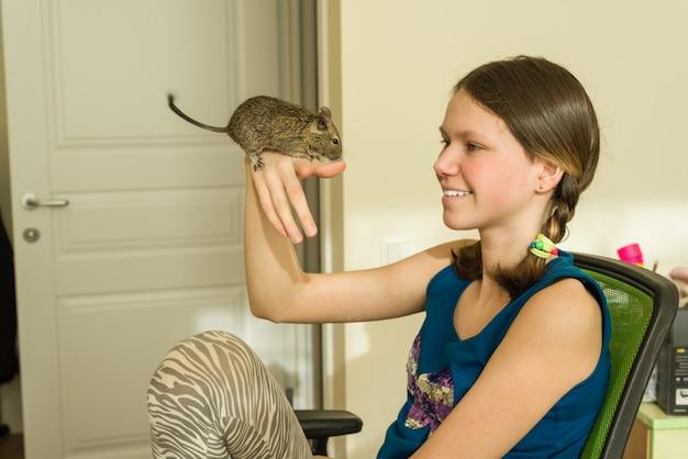 Menina adolescente, segurando, esquilo chileno, degus