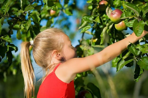Menina, agarrando uma maçã