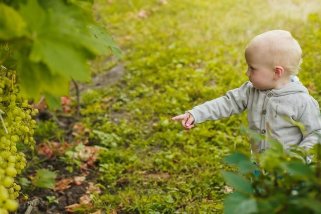 Menina aponta para uvas crescendo no mato