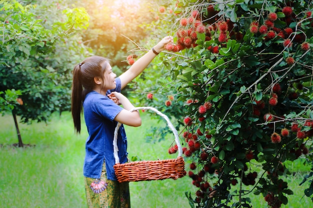 Menina asiática bonita que escolhe a fruta do rambutan da árvore no dia de verão ensolarado bonito