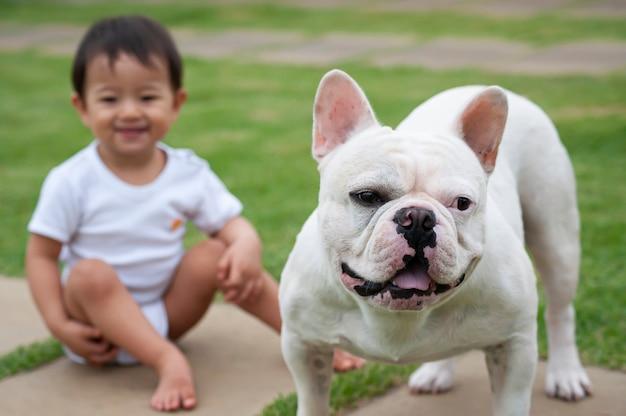 Menina asiática de 1 ano brincando com seu cachorro bulldog francês. cena agradável que lembra a amizade entre crianças e animais domésticos. foco seletivo