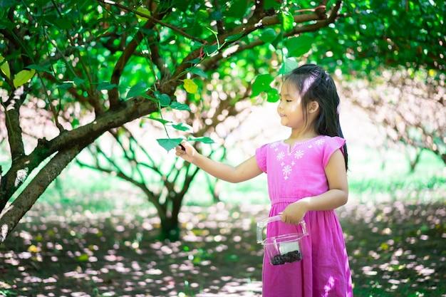Menina asiática recolher a fruta de amoreira no jardim