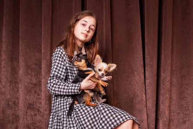 Menina bonita com dois cachorros chihuahua. cachorro chihuahua jovem animal garota feliz animal de estimação