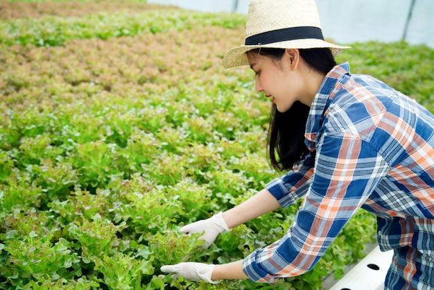 Menina bonita do fazendeiro asiático novo que trabalha na exploração agrícola hidropônica dos vegetais com felicidade