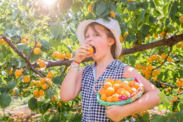 Menina bonita, jovem é colheita de damascos em um lindo dia de verão