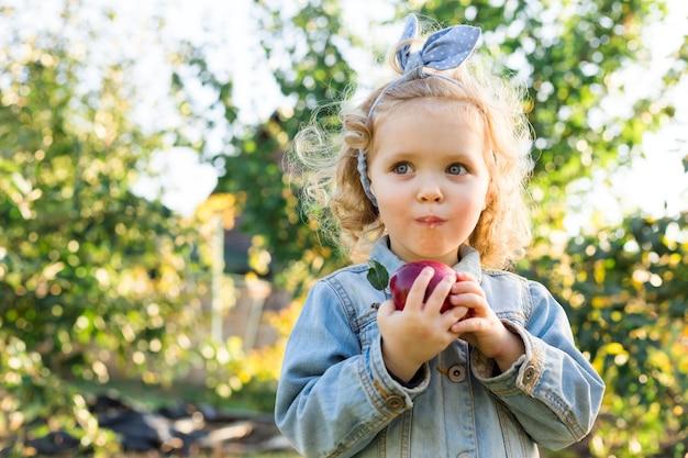 Menina bonitinha comendo maçã vermelha orgânica madura no pomar de maçãs no outono.