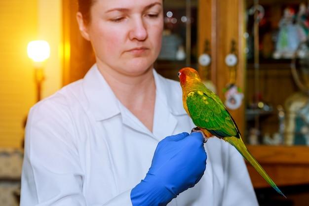 Menina bonito no veterinário com seu papagaio