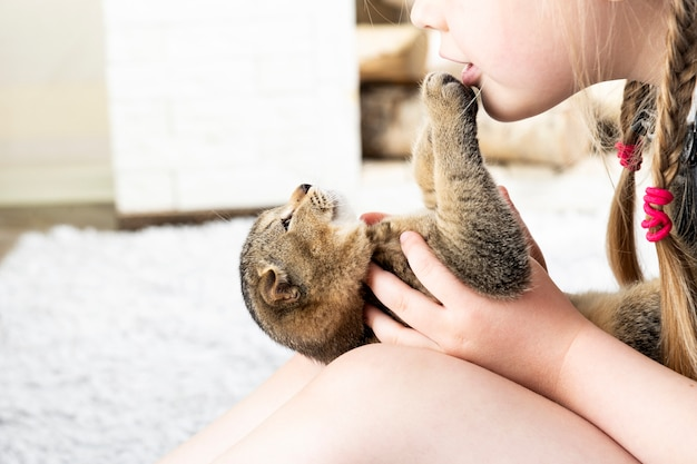 Menina brinca com um gatinho britânico em um tapete em um apartamento