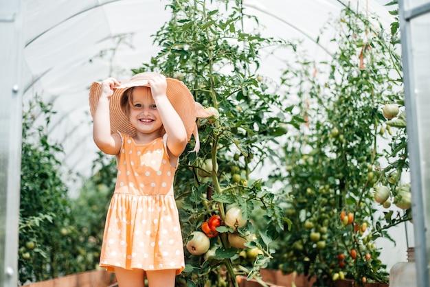 Menina colhe no outono, verão ensolarado e quente, tomates em uma estufa Foto Premium