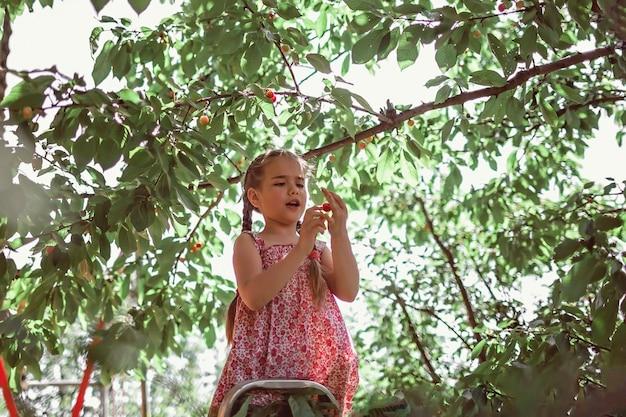 Menina colhendo cereja da árvore frutífera em pé na escada