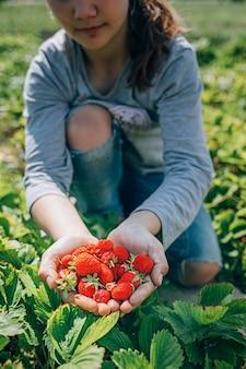 Menina colhendo morangos maduros do jardim