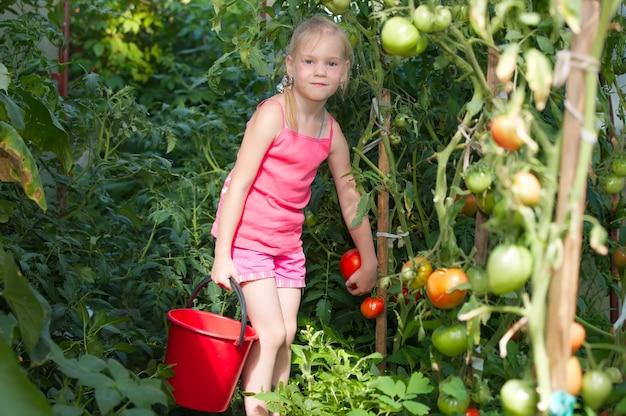 Menina colhendo tomate em uma estufa