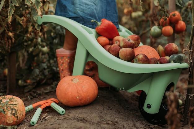 Menina colhendo vegetais e frutas e colocando no carrinho de mão do jardim