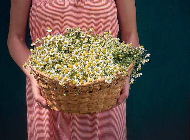 Menina com camomila flores.