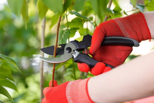 Menina corta ou apara o arbusto com tesoura no jardim.