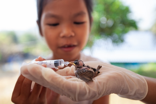 Menina criança asiática, água alimentação, e, alimento, para, pardal bebê, pássaro, com, seringa