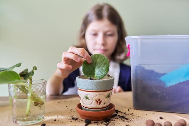Menina criança planta folha de planta jovem de saintpaulia no pote. utiliza espátula, regador, solo. nova planta em casa, cuidado, hobby, planta de casa, amigos em vasos, conceito de crianças