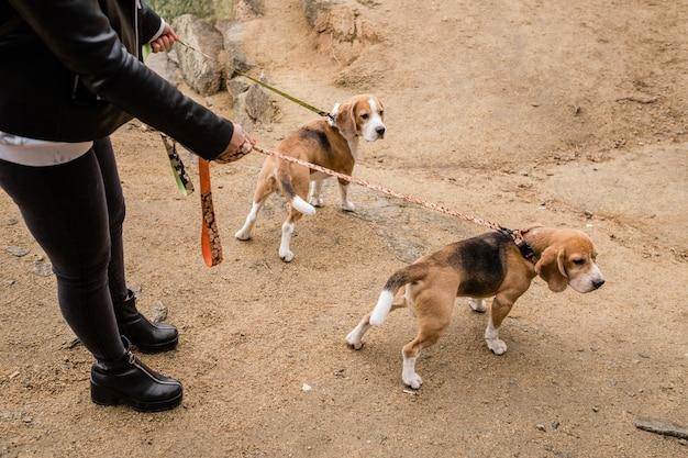 Menina em roupas casuais segurando coleiras artesanais de dois filhotes de cachorro puro-sangue fofos enquanto relaxa com eles em ambiente natural