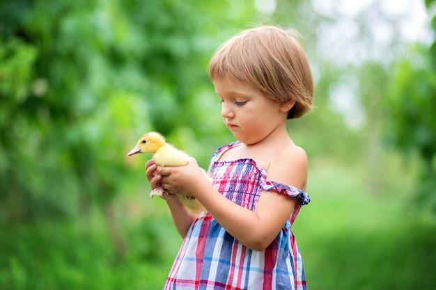 Menina em um vestido de verão brinca com um pequeno patinho na natureza na grama