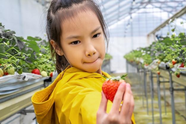 Menina está postando e cheirando morango na fazenda hidropônica de morango de sendai