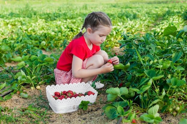 Menina feliz criança escolher e comer morangos em uma plantação