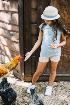 Menina, ficar, em, a, fazenda, alimentação, galinhas