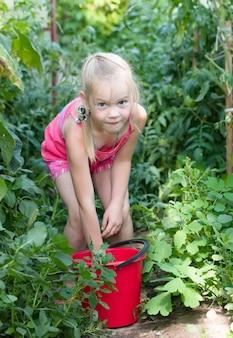 Menina horta colhendo tomates maduros