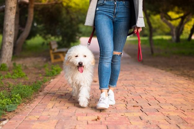 Menina jovem, com, dela, cão, em, um, parque