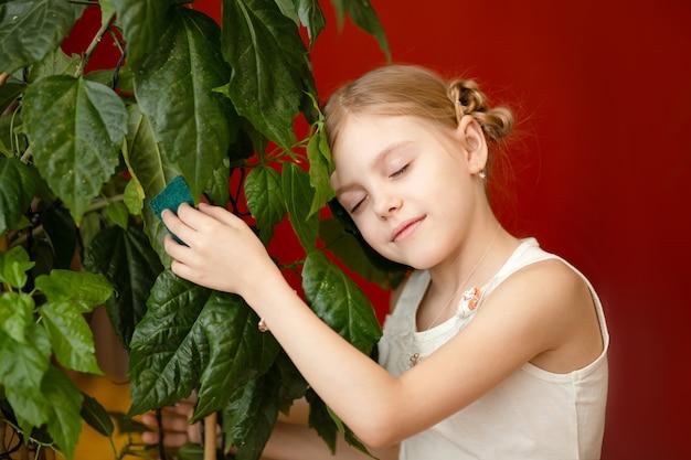 Menina linda de 7-8 anos de idade, com ternura cuida de plantas domésticas, limpa as folhas