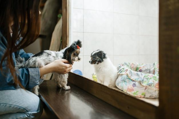 Menina mostra o cachorro para seu cachorro, futuros amigos, loja de animais. criança comprando equipamentos em petshop, acessórios para animais domésticos