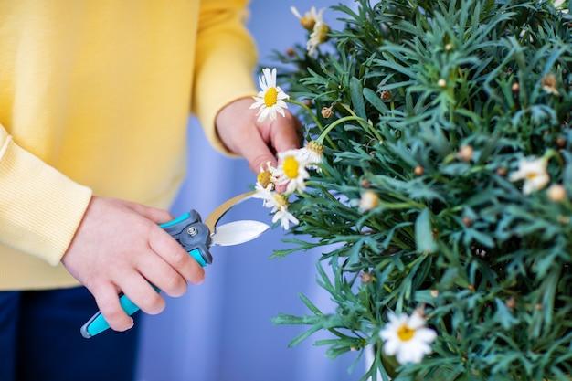 Menina no moletom amarelo cuidando das flores da varanda, podando com tesouras de poda.