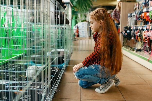 Menina olhando na gaiola na loja de animais. criança comprando equipamentos em petshop, acessórios para animais domésticos
