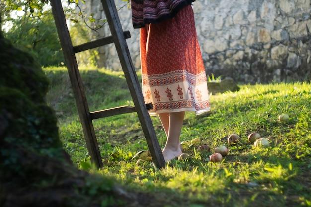 Menina pega maçãs de uma árvore em um jardim de outono ao pôr do sol