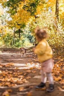 Menina que olha seu cão de estimação ao andar no caminho na floresta