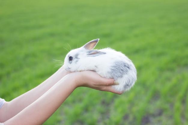 Menina que prende um coelho pequeno em um prado verde.