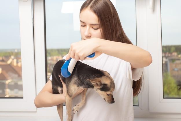 Menina segura um animal de estimação e o enrola com um rolo adesivo para fazer roupas