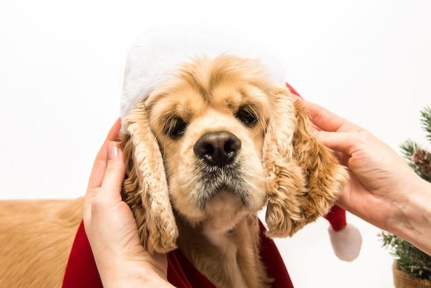 Menina, segurando as orelhas do cão e brincar com seu cachorro