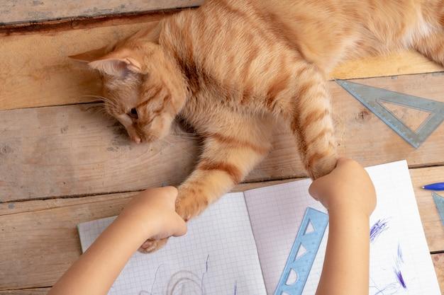 Menina segurando as patas de gato, gatinho deitado na mesa de madeira