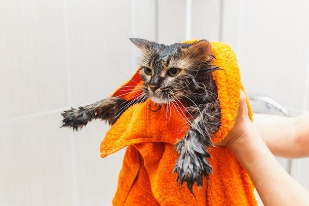 Menina segurando um gato molhado em uma toalha laranja no banheiro