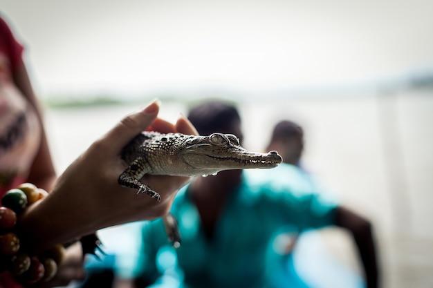 Menina segurando um pequeno crocodilo.