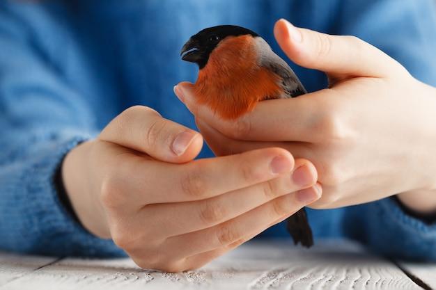 Menina segurar dom-fafe pássaro nas mãos